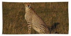 Cheetah On Savanna Masai Mara Kenya Hand Towel by Hiroya Minakuchi