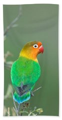 Close-up Of A Fischers Lovebird Hand Towel by Panoramic Images