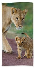 Close-up Of A Lioness And Her Cub Hand Towel by Panoramic Images