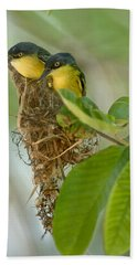 Close-up Of Two Common Tody-flycatchers Hand Towel by Panoramic Images