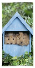 Guinea Pig In House Gp104 Hand Towel by Greg Cuddiford