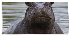 Hippopotamus Bull Khwai River Botswana Hand Towel by Vincent Grafhorst