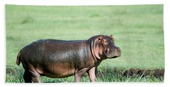 Hippopotamus Hippopotamus Amphibius Hand Towel by Panoramic Images