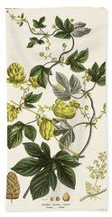 Hop Vine From The Young Landsman Hand Towel by Matthias Trentsensky