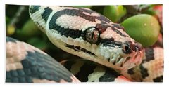 Jungle Python Hand Towel by Kelly Jade King