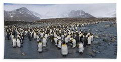 King Penguins Aptenodytes Patagonicus Hand Towel by Panoramic Images