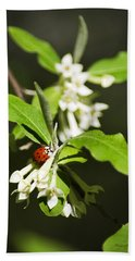 Ladybug And Flowers Hand Towel by Christina Rollo