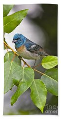 Lazuli Bunting 3a Hand Towel by Sharon Talson