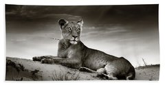 Lioness On Desert Dune Hand Towel by Johan Swanepoel