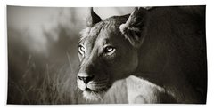 Lioness Stalking Hand Towel by Johan Swanepoel