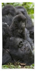 Mountain Gorilla Baby Playing Hand Towel by Suzi  Eszterhas