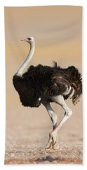 Ostrich Hand Towel by Johan Swanepoel