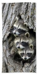 Raccoon Trio At Den Minnesota Hand Towel by Jurgen & Christine Sohns