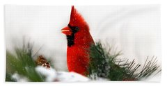Red Cardinal Hand Towel by Christina Rollo