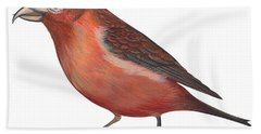 Red Crossbill Hand Towel by Anonymous