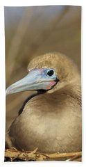 Red-footed Booby Incubating Eggs Hand Towel by Tui De Roy