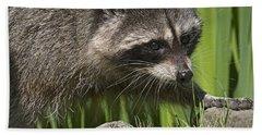Rocky Raccoon Hand Towel by Sharon Talson