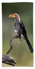 Southern Yellowbilled Hornbill Hand Towel by Johan Swanepoel
