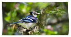 Spring Blue Jay Hand Towel by Christina Rollo