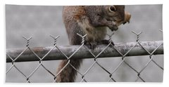 Squirell Snacking On The Fence Hand Towel by Dan Sproul