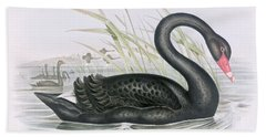 The Black Swan Hand Towel by John Gould