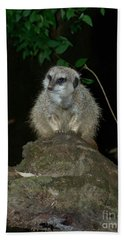 The Meerkat Hand Towel by Chalet Roome-Rigdon