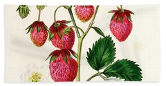 The Roseberry Strawberry Hand Towel by Edwin Dalton Smith