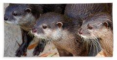 Three Otters Hand Towel by Daniel Eskridge