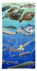 Underwater Creatures Montage Hand Towel by English School