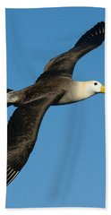 Waved Albatross Diomedea Irrorata Hand Towel by Panoramic Images