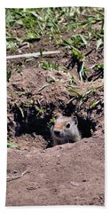 Ground Squirrel Hand Towel by Dan Sproul