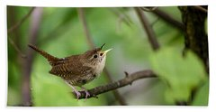 Wild Birds - House Wren Hand Towel by Christina Rollo