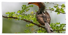 Yellow-billed Hornbill Hand Towel by Bruce J Robinson