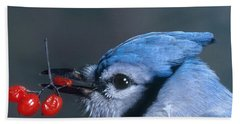 Blue Jay Hand Towel by Photo Researchers, Inc.