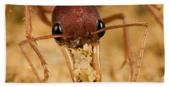 Bulldog Ant Myrmecia Gulosa Worker Hand Towel by Mark Moffett