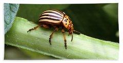 Colorado Potato Beetle Hand Towel by Science Source