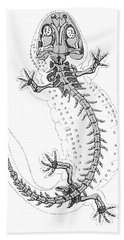 Cryptobranchus, Living Fossil Hand Towel by Science Source