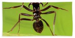 Japanese Slave-making Ant Polyergus Hand Towel by Satoshi Kuribayashi