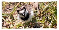 Just Hatched - Killdeer Hand Towel by Angie Rea