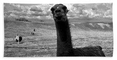 Llama Hand Towel by Cale Best