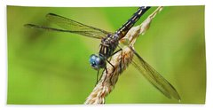 Bath Towel featuring the photograph Meadowhawk by Rodney Campbell
