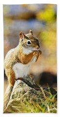 Red Squirrel Hand Towel by Elena Elisseeva