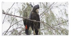 Red Tailed Black Cockatoos Hand Towel by Douglas Barnard