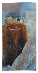 Woodchuck Hand Towel by Tony Beck