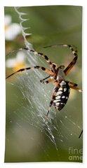 Zipper Spider In The Swamp Hand Towel by Carol Groenen