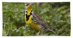 Western Meadowlark Hand Towel by Doug Herr