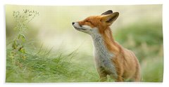 Zen Fox Series - Zen Fox Hand Towel by Roeselien Raimond