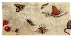 A Study Of Various Insects, Fruit And Animals Hand Towel by Jan Van Kessel the Elder