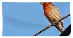 American Crossbill On Wire     Spring   Indiana   Hand Towel by Rory Cubel