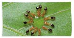 Ant Monomorium Intrudens Group Drinking Hand Towel by Takashi Shinkai